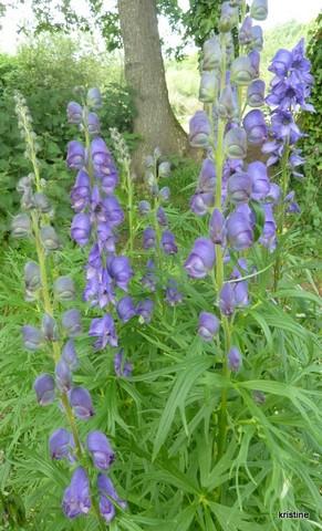 Plantes Du Jardin 2 Horizons Bretons
